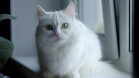后坐白色的秋天猫 股票录像