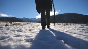 后方后面观点的无法认出的人用爬上在草甸多雪的小山的棍子在好日子 迁徙年轻的徒步旅行者 股票视频