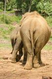 从后方的两头大象 免版税库存照片