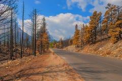 后果2015年雷诺兹小河荒地森林火灾冰川国家公园 库存照片