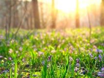 以后的春天 免版税图库摄影