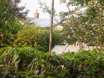 后花园场面外面在日落光绿叶叶子树篱 免版税库存图片