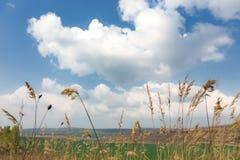后边麦子耳朵和云彩 免版税库存照片
