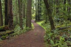 后退通过森林地的足迹 免版税图库摄影