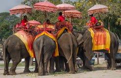后部泰国大象 免版税库存照片