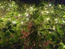 后院在点燃街道的灌木的露台光 库存照片