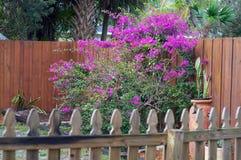后院庭院在有九重葛花的佛罗里达 免版税库存照片