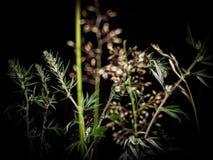 后院植物 库存照片