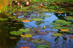 后院池塘 免版税库存图片