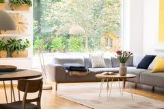 后院的看法通过在自然客厅内部的一个大窗口与植物、木家具和一个轻松的沙发 免版税库存图片