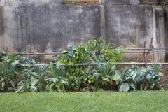 后院菜园 免版税库存图片