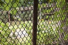 后院通过链节篱芭 免版税库存图片
