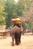 后面旅客骑马大象 免版税图库摄影