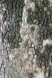 后面树 免版税库存图片
