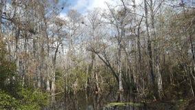 后面森林 库存照片