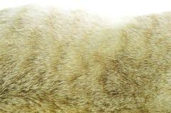 后面灰色猫毛皮纹理和背景 库存图片