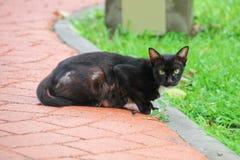 后面猫 免版税库存照片