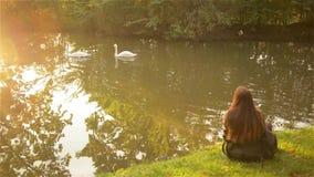 从后面的女孩坐一棵草在城市公园并且观看白色浮动天鹅 影视素材