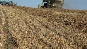 后面落从农厂收割机组合的看法秸杆和尘土运作在粮田 4K 股票录像
