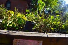 后面被点燃的植物在社区庭院里 免版税图库摄影