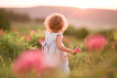 后面观点的卷曲儿童女孩在有桃红色开花玫瑰花的春天庭院,日落时间里走 库存图片
