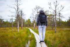 后面观点的有远足在森林里的背包的人 免版税图库摄影