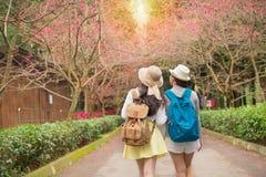 后面观点的游客旅行妇女 免版税图库摄影