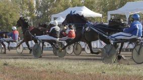后面观点的赛马在轨道(慢动作)的种族快速地小跑 影视素材