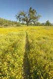 向一棵孤立树的人行道通过春天花五颜六色的花束开花在壳小河路的路线58的,在西部烘烤 免版税库存照片
