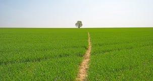 向一棵树的道路在一个绿色领域 库存照片