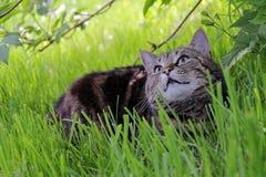 向上感兴趣的猫看起来 库存照片