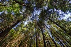 向上看树 库存图片