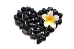 向与羽毛(赤素馨花)花的心脏扔石头在白色背景 库存照片