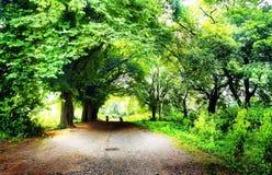 向光的路通过森林 库存图片