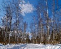 向冬天木头的桦树路 库存图片