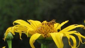 向后庭院昆虫花 影视素材