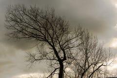 向后弯曲的树 库存图片