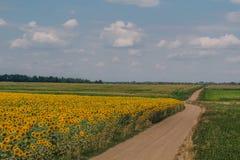 向向日葵的领域的路 免版税库存照片