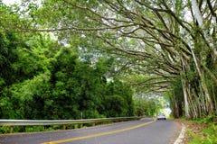 向哈纳的著名路充满狭窄的一车道桥梁、簪子轮和难以置信的海岛视图,弯曲的沿海路有看法 库存图片