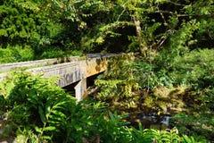 向哈纳的著名路充满狭窄的一车道桥梁、簪子轮和难以置信的海岛视图,弯曲的沿海路有看法 免版税库存图片