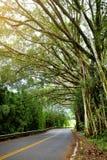 向哈纳的著名路充满狭窄的一车道桥梁、簪子轮和难以置信的海岛视图,弯曲的沿海路有看法 免版税图库摄影