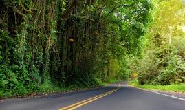 向哈纳的著名路充满狭窄的一车道桥梁、簪子轮和难以置信的海岛视图,毛伊,夏威夷 库存图片