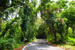 向哈纳的著名路充满狭窄的一车道桥梁、簪子轮和难以置信的海岛视图,毛伊,夏威夷 免版税库存图片
