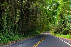 向哈纳的著名路充满狭窄的一车道桥梁、簪子轮和难以置信的海岛视图,毛伊,夏威夷 免版税图库摄影