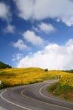 向墨西哥人Sunflowe的路 免版税库存照片