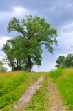 向天空的大树村庄路 库存照片