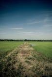 向密林的路径从稻 免版税库存图片