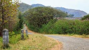 向密林的路 免版税库存照片