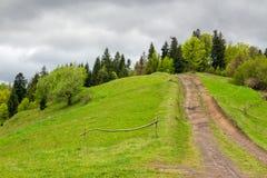 向山森林的道路 库存照片