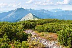 向峰顶的一条道路通过爬行杉木 免版税库存图片